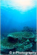 サンゴ礁 プエルトガレラ 水中
