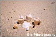 白砂と貝殻