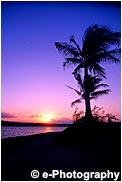 夕陽とヤシの木 ピンク