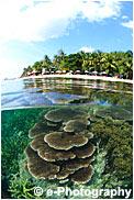 サンゴ礁 半水面写真