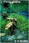 水中の草木