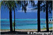 ヤシの木とビーチ