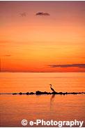 夕焼けと鳥