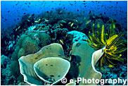 大きく育ったサンゴ礁