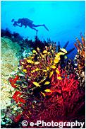 サンゴに集まる熱帯魚