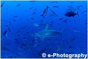 サメと小魚
