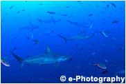 サメと群れ