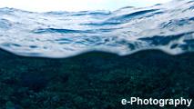 海 波 水 サンゴ