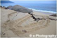 屋久島 アオウミガメの足跡