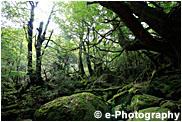 屋久島 もののけ姫の森 白谷雲水峡