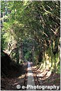 屋久島 トロッコ道
