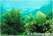 カリブ海の水中風景