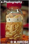 乾燥タツノオトシゴ(食材)