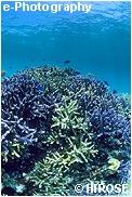 サンゴの色も色々