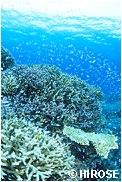 幼魚の群れ