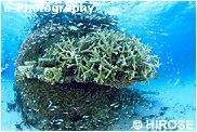 サンゴと小魚