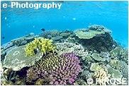サンゴの色