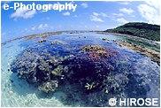 干潮のサンゴ
