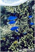 海面に映る魚