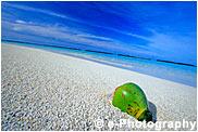 海岸とココナッツ
