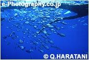流木に付く魚とサメ