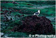 干潮時の海草