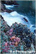 タイドプールとヒトデ 貝