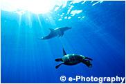 ミナミハンドウイルカ アオウミガメ