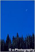 針葉樹の森と真昼の月