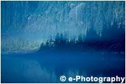 霧の朝、針葉樹の森