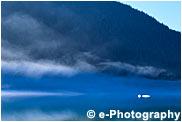 霧の朝、針葉樹の森と氷