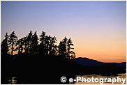 針葉樹の森と夕焼け