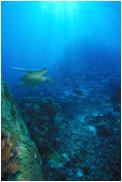 アオウミガメとギンガメアジ