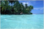 水辺のヤシの木 モルジブの海