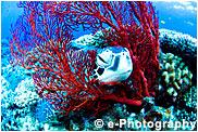 アオウミガメ,リュウキュウイソバナ